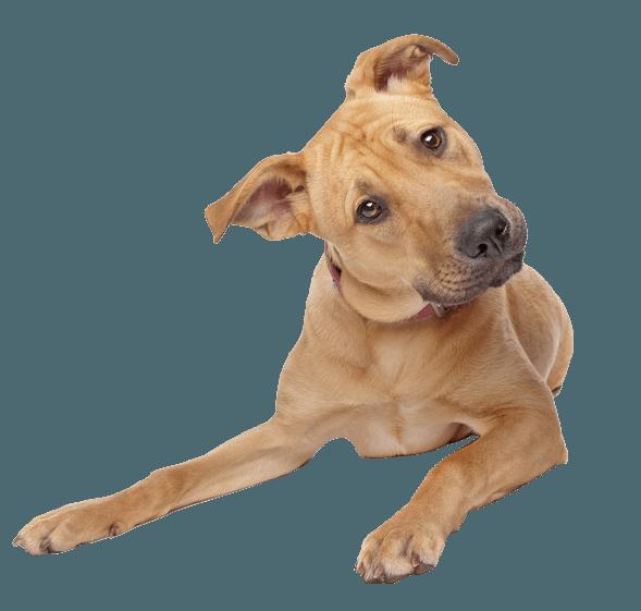 Dog PNG Transparent Background - 146930