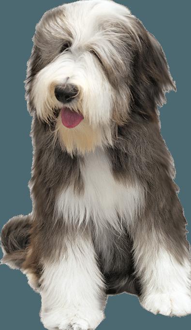 Dog PNG Transparent Background - 146937