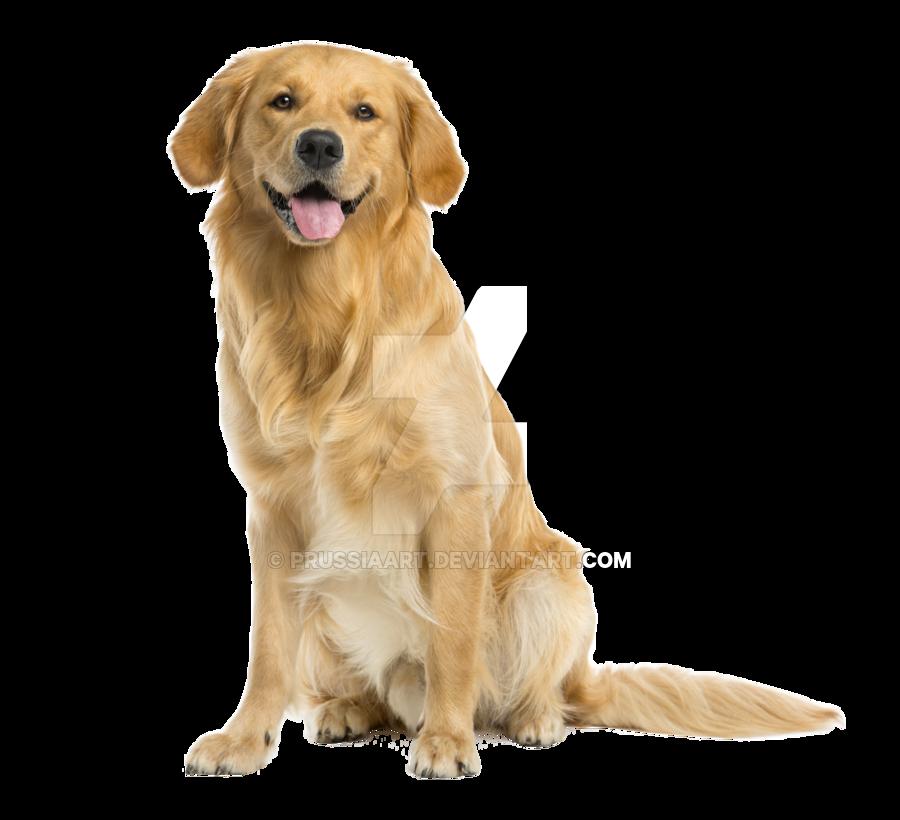 Dog PNG Transparent Background - 146935