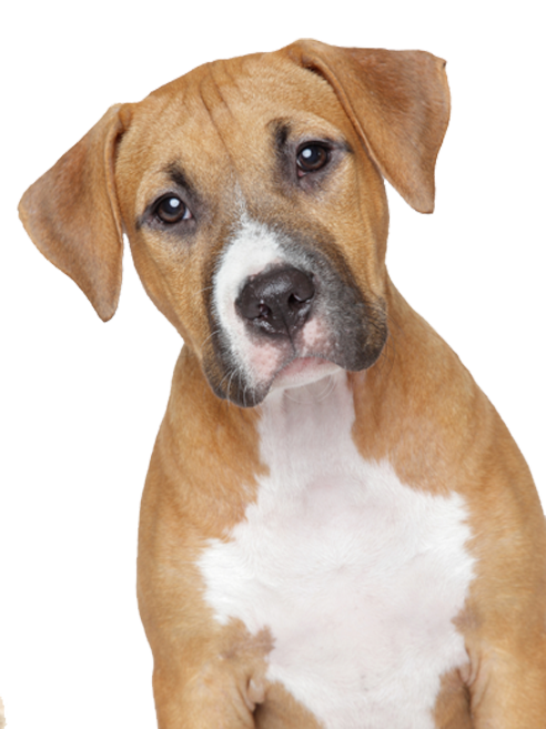 Puppy PNG Image