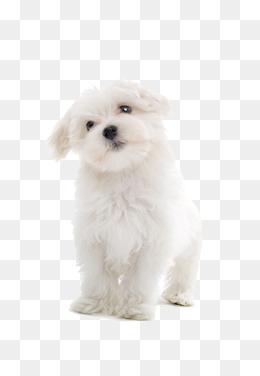 Dog PNG Transparent Background - 146942