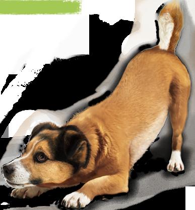 Dog PNG Transparent Background - 146933