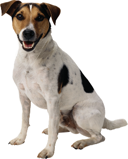 Dog PNG Transparent Background - 146931
