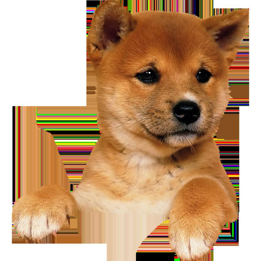 Dog PNG Transparent Background - 146944