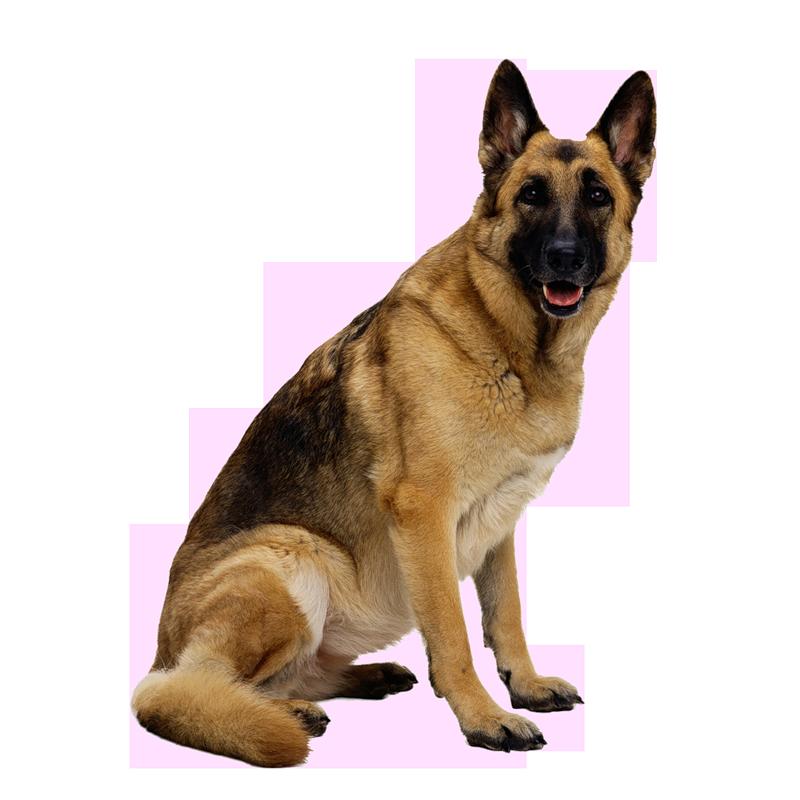 Dog PNG Transparent Background - 146929