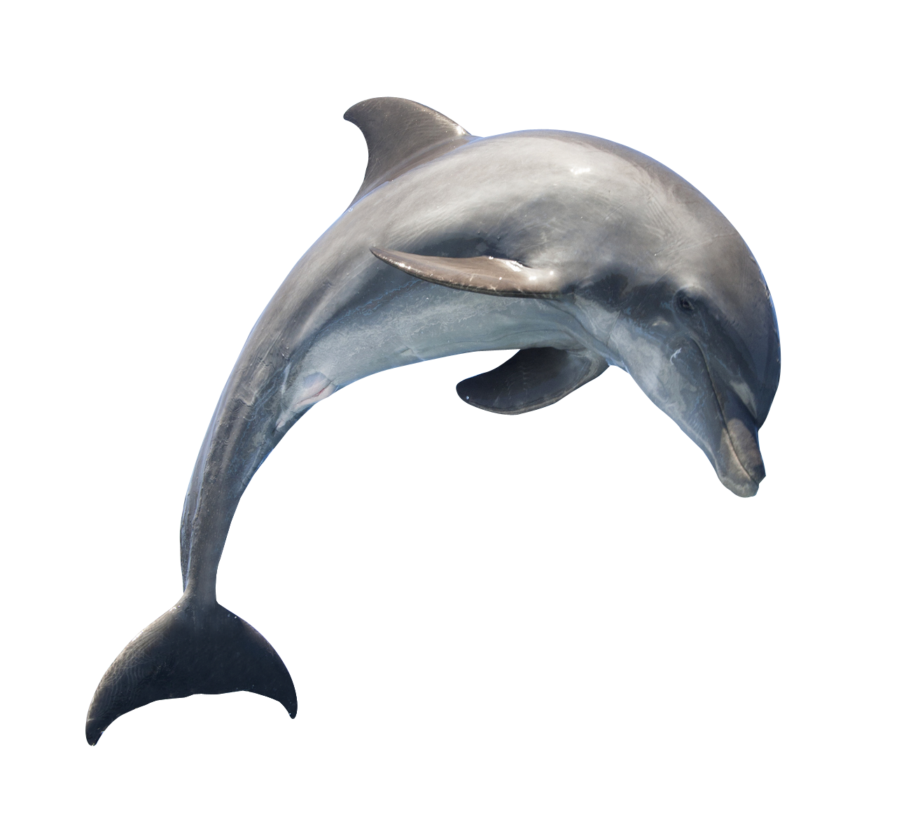 Dolphin HD PNG - 94292
