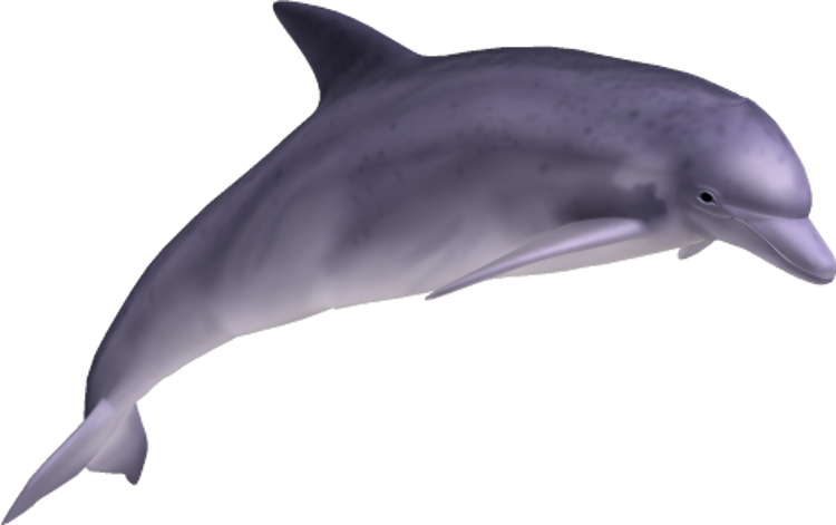 Dolphin HD PNG - 94293