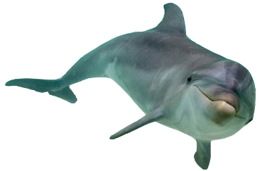Dolphin HD PNG - 94296
