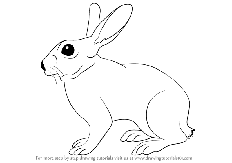 Learn How to Draw a Rabbit (Farm Animals) Step by Step : Drawing Tutorials - Domestic Animals PNG Black And White