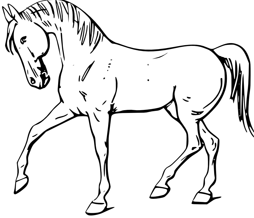 Outline Drawing of Domestic Animals - Yahoo Image Search Results - Domestic Animals PNG Black And White