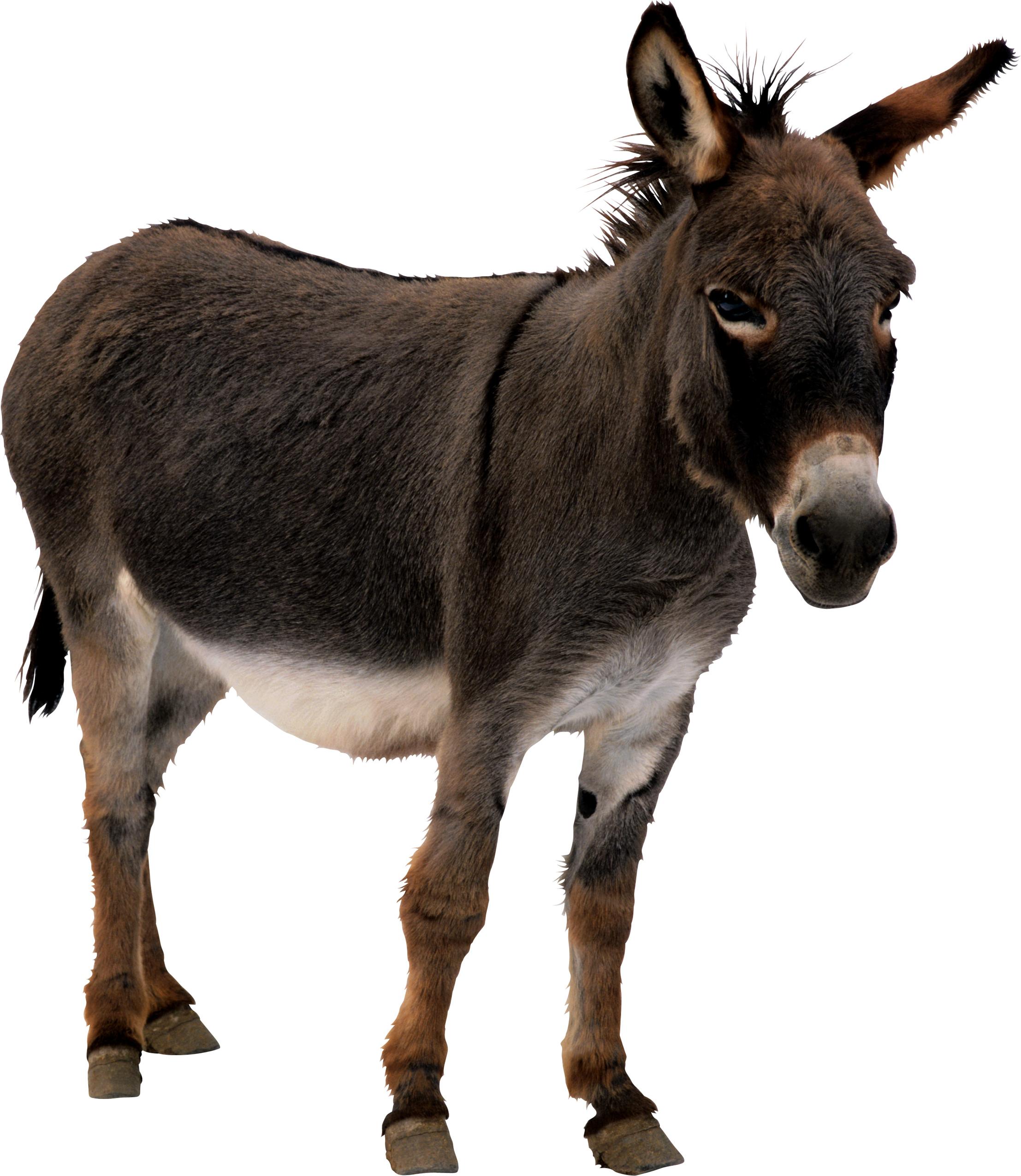 Donkey HD PNG