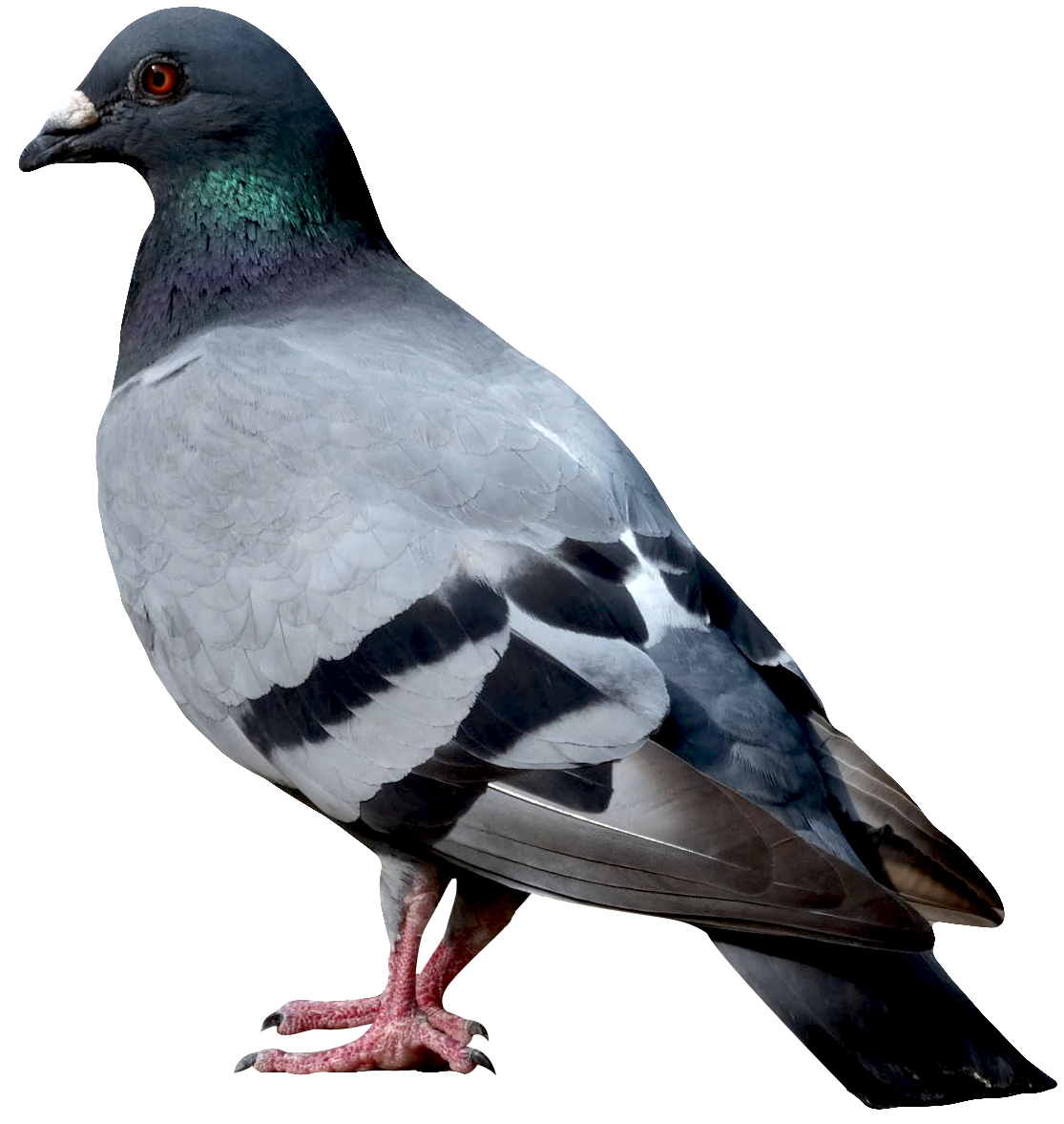 Dove PNG - 112139