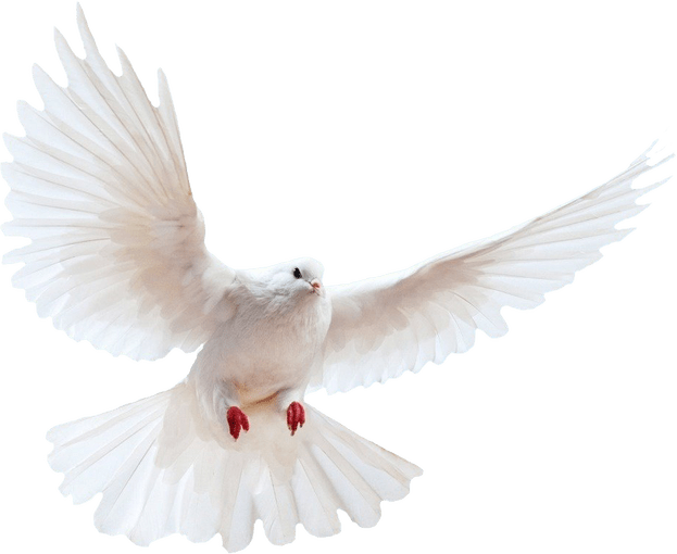 Dove PNG - 112133