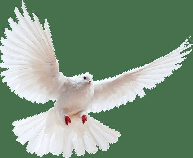 Dove PNG-PlusPNG.com-623 - Dove PNG