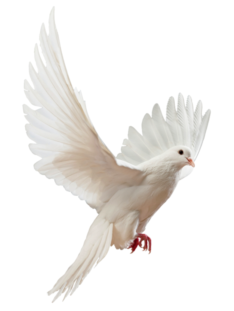 0_22fa58_94e715bf_XL.png - Dove PNG