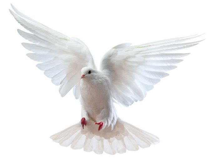 Dove PNG - 112132