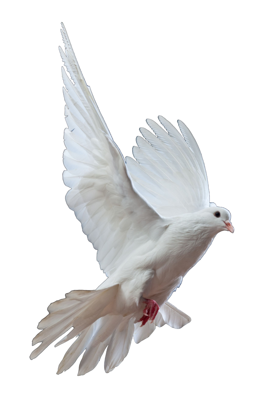 Dove PNG - 112138