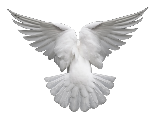 Dove.png - Dove PNG