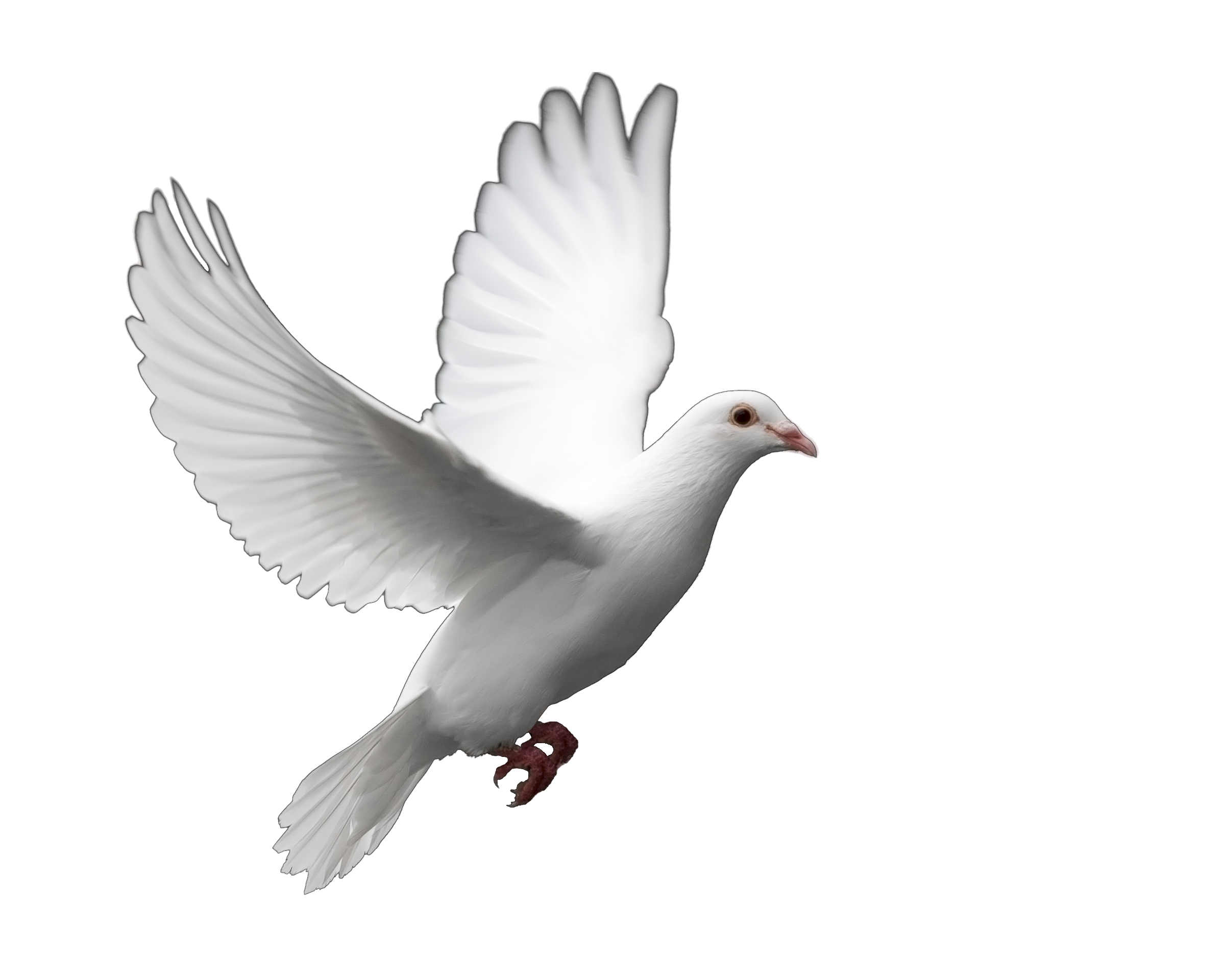Funeral Dove Release can supply doves to be released at funerals and  memorial services in Miami, Fort Lauderdale and West Palm Beach. - Dove PNG