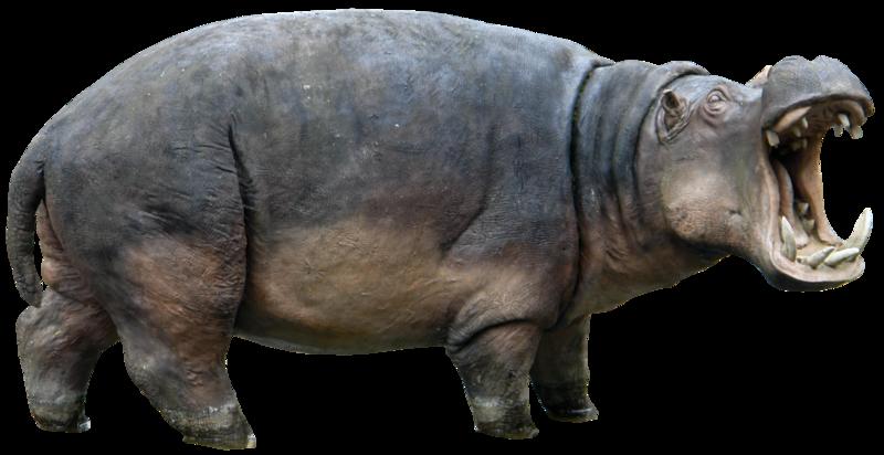Hippopotamus PNG