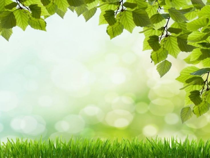 Beautiful Green Grass PowerPoint Background. Available In 960x720, This  PowerPoint Template Is Free To - Download PNG HD For Powerpoint