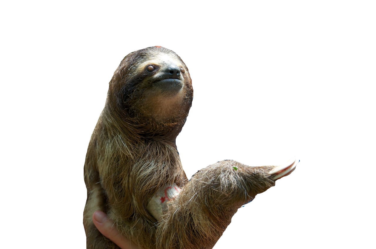 Download PNG image - Sloth Png Pic - Sloth PNG