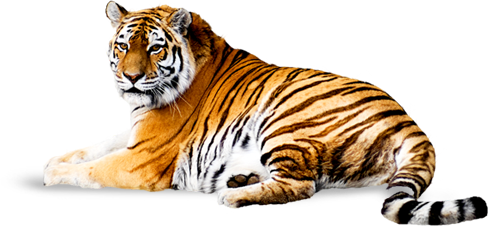 Download PNG Image: Tiger PNG Image, Free Download, Tigers - Tiger PNG