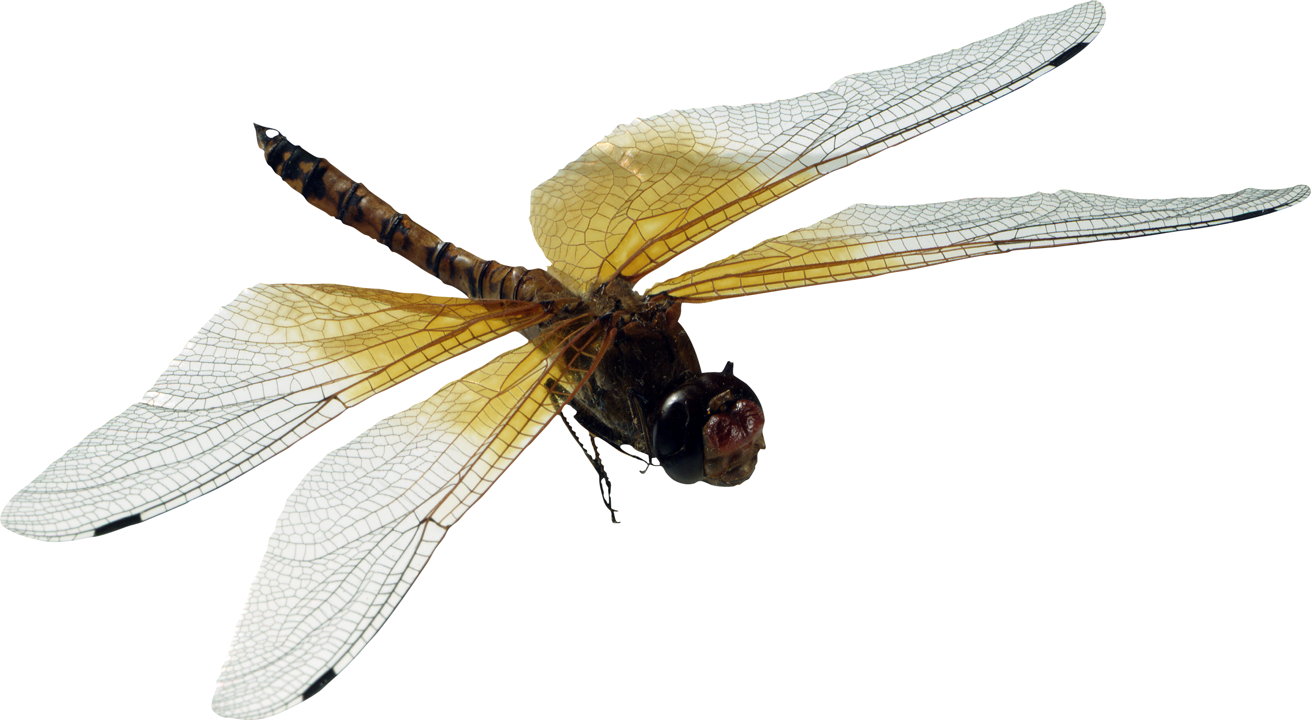 Dragonfly PNG - 1738