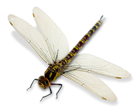 Dragonfly PNG - 1739
