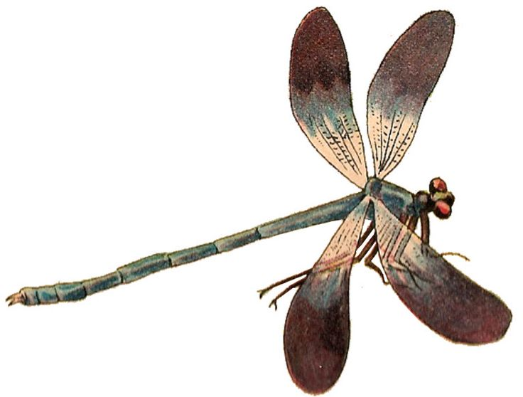 Dragonfly PNG - 1742