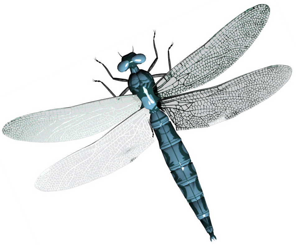 Dragonfly PNG - 1737