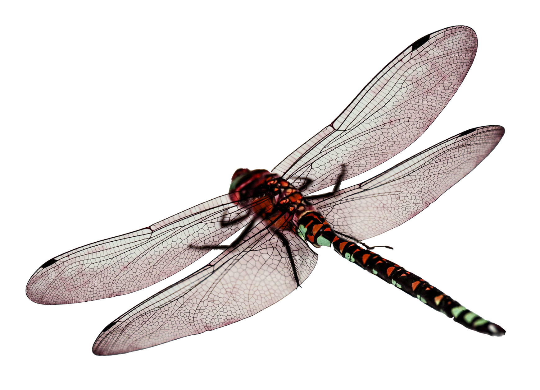Dragonfly PNG - 1731