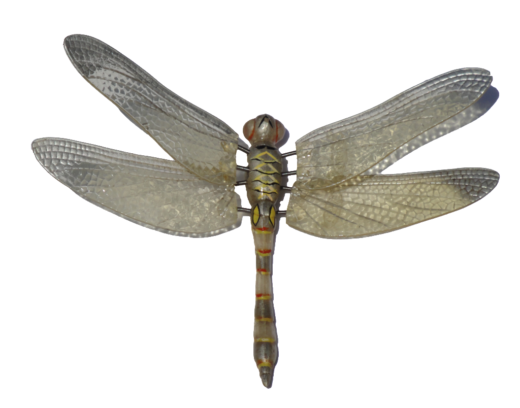 Dragonfly PNG - 1736