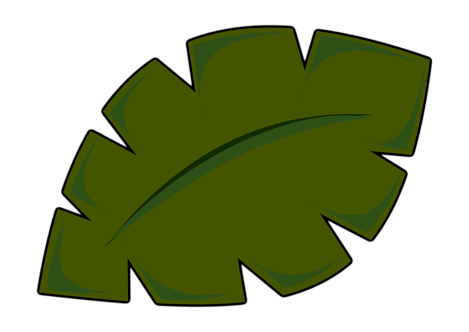 Dschungel Blatter PNG