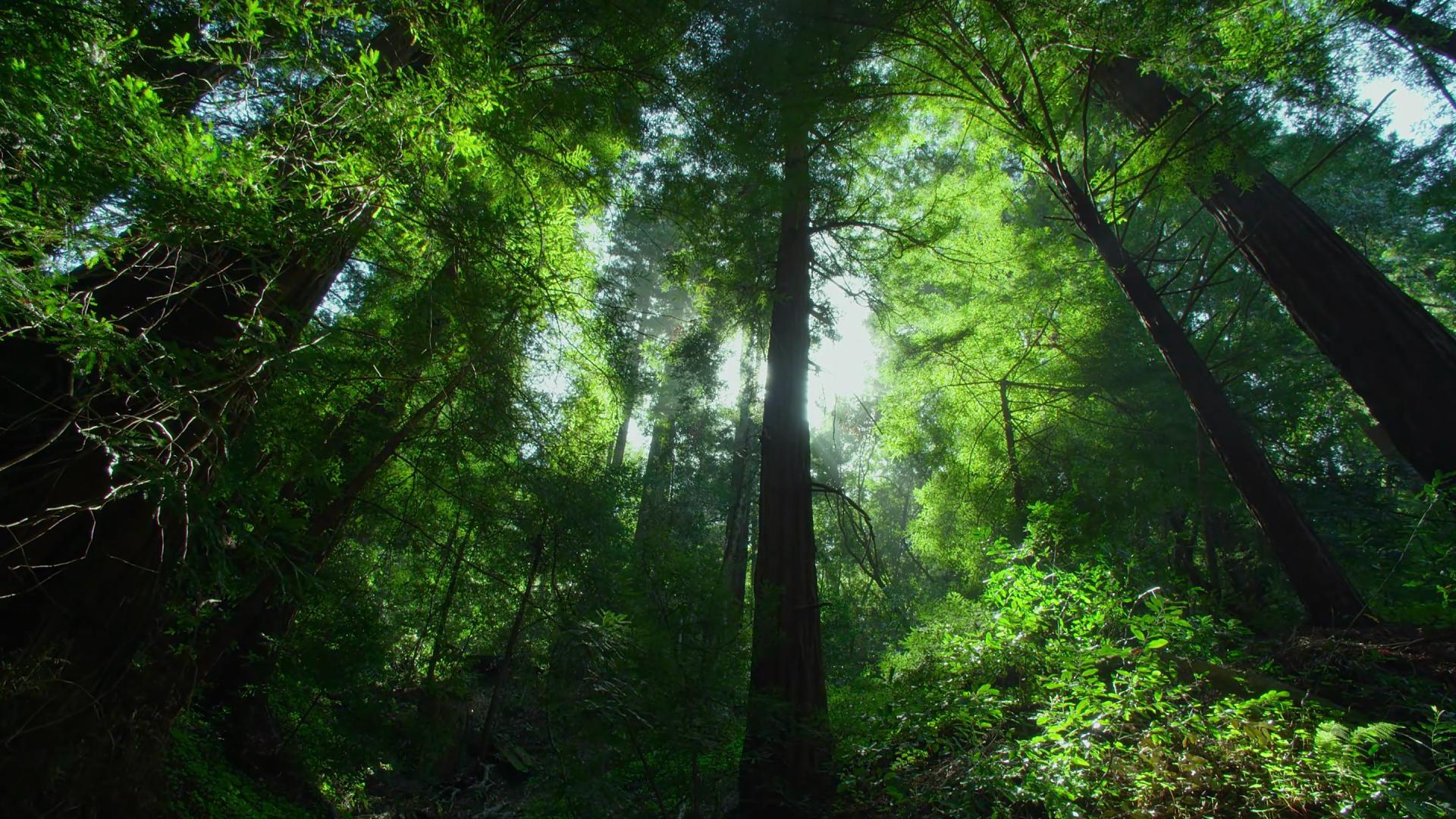 Erde/Natur - Dschungel Wallpaper - Dschungel Hintergrund PNG