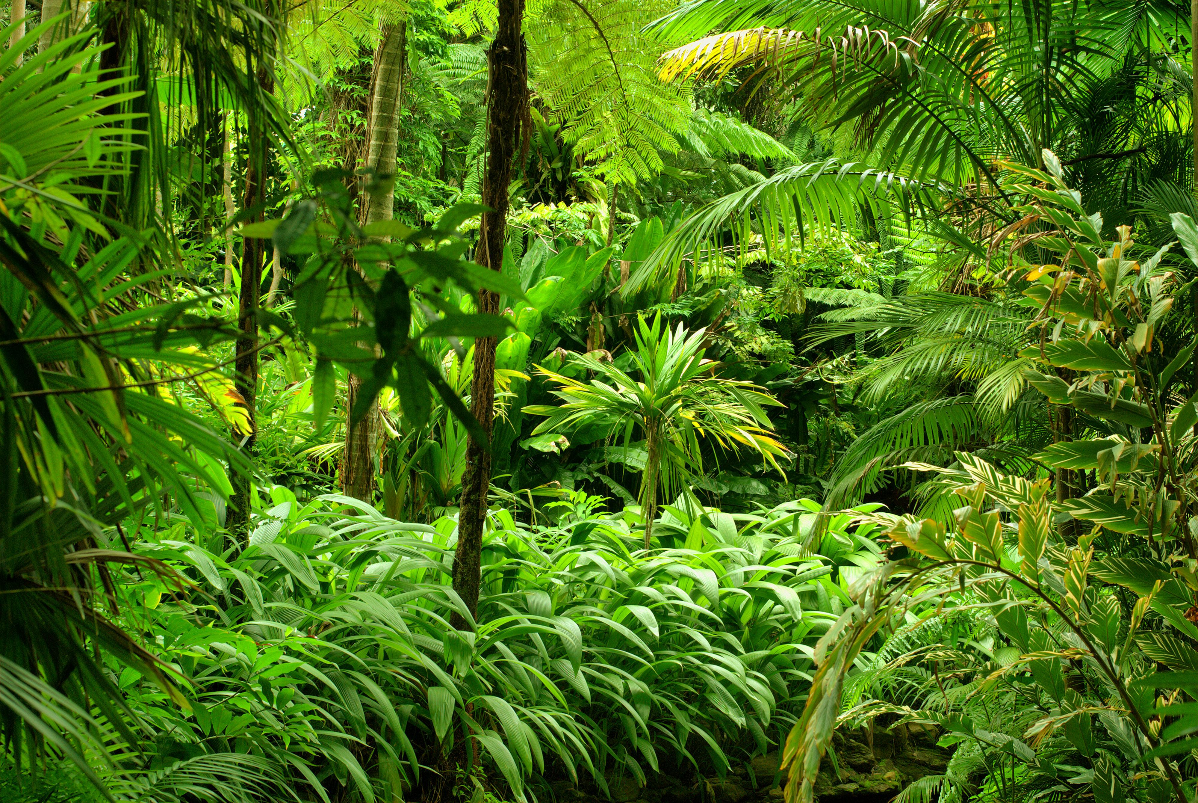 HD Wallpaper | Background Image ID:700059 - Dschungel Hintergrund PNG