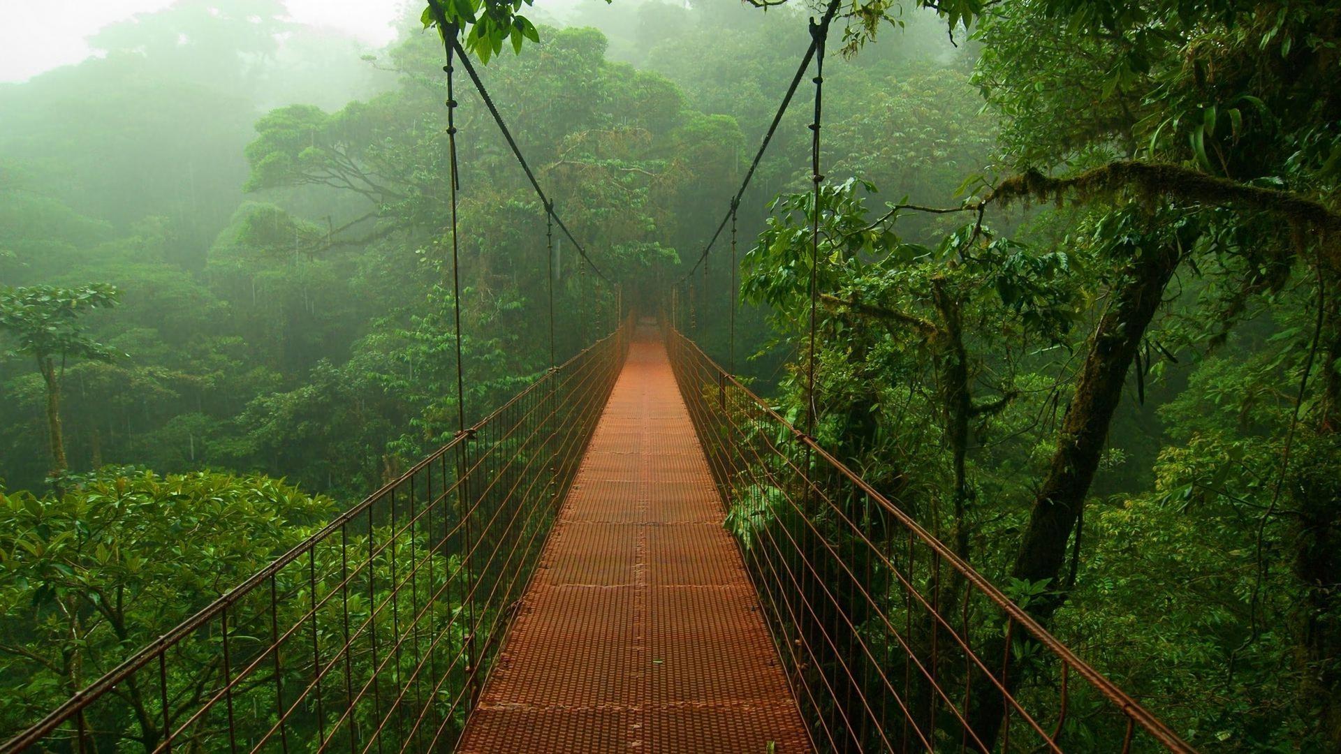 Menschengemacht - Brücke Wald Rainforest Dschungel Wallpaper - Dschungel Hintergrund PNG