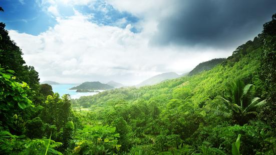 Screenshot Image - Dschungel Hintergrund PNG