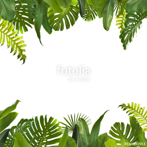 Tropical Jungle Leaves Background - Dschungel Hintergrund PNG