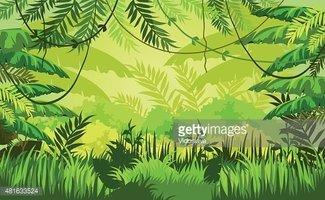 Tropischen Dschungel-Hintergrund - Dschungel Hintergrund PNG