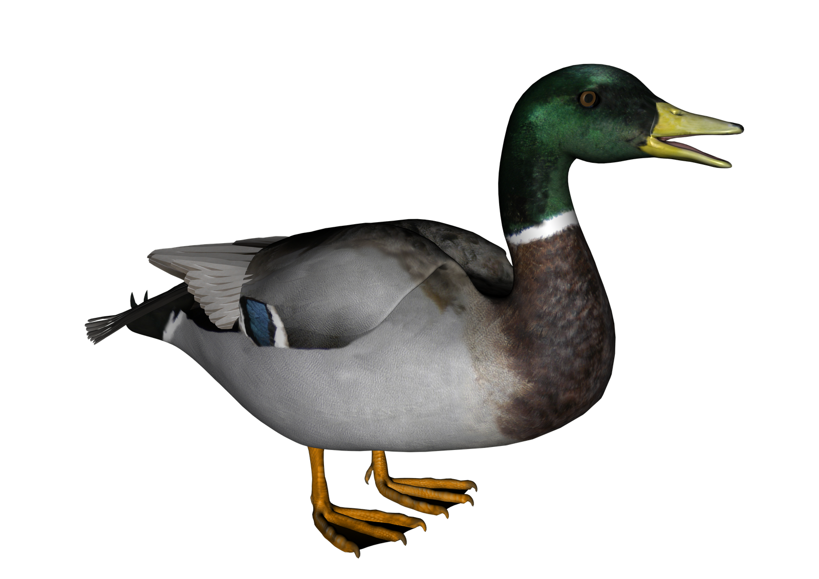Duck Transparent Background
