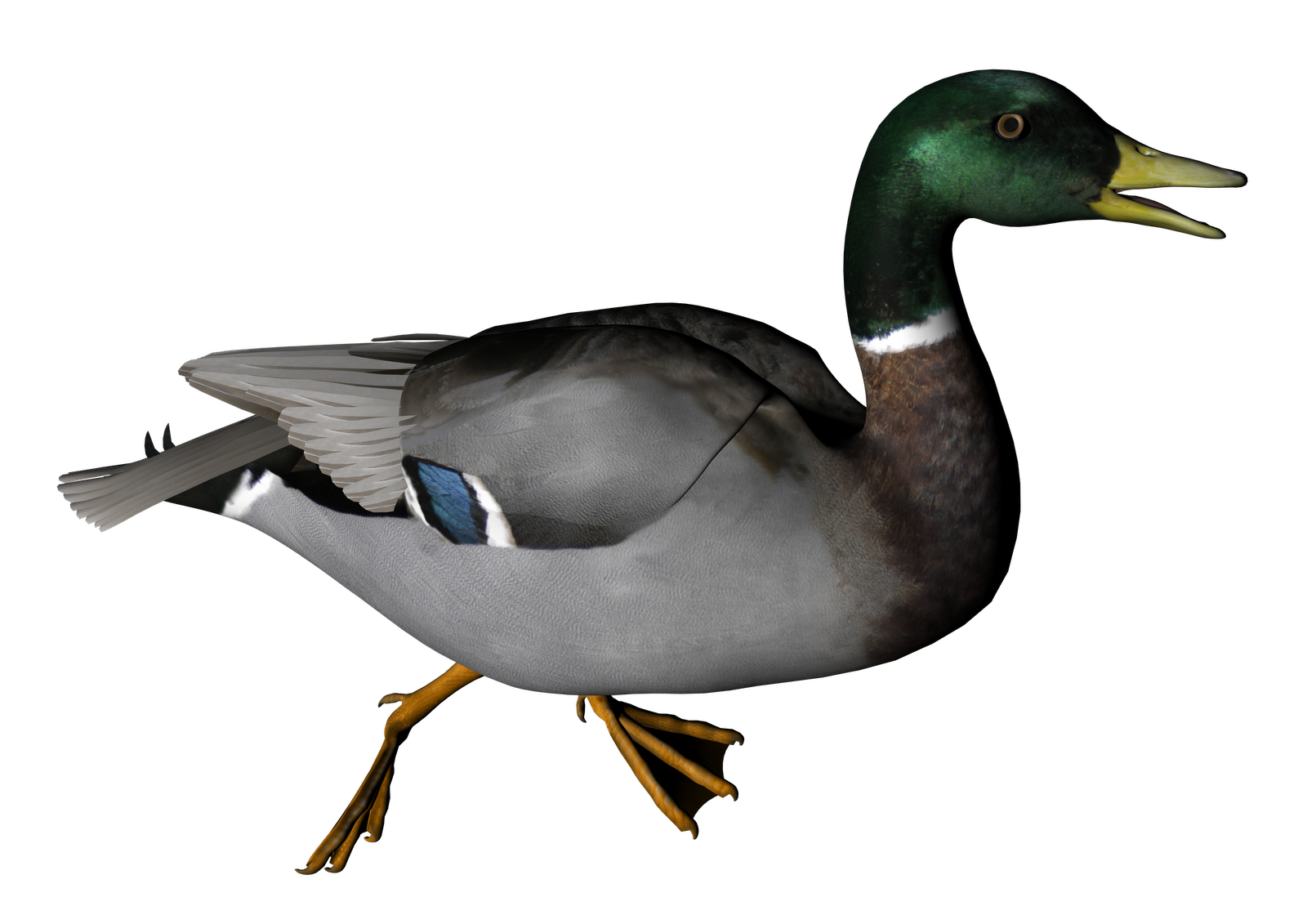 Duck PNG Transparent Image - Duck Hunting PNG HD