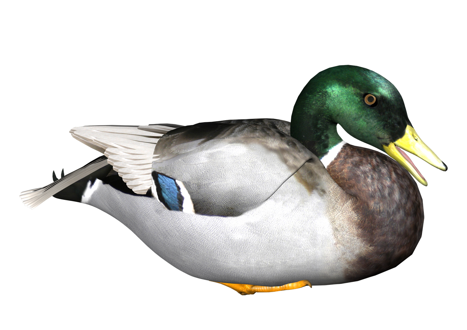 Duck Transparent Background - Duck PNG