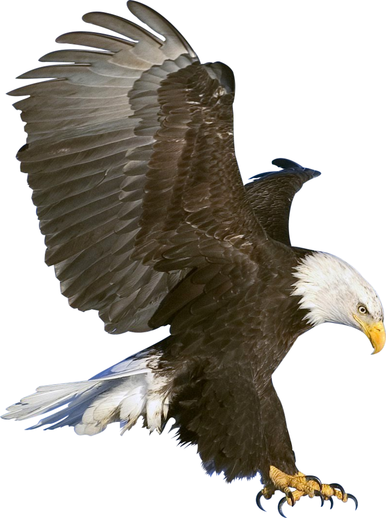 Eagle in flight Render by bobhertley PlusPng.com  - Eagle HD PNG