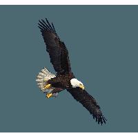 Eagle Png Image Download PNG Image - Eagle HD PNG