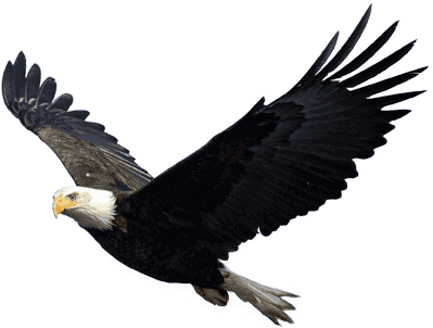 Eagle PNG image, free download - Eagle HD PNG