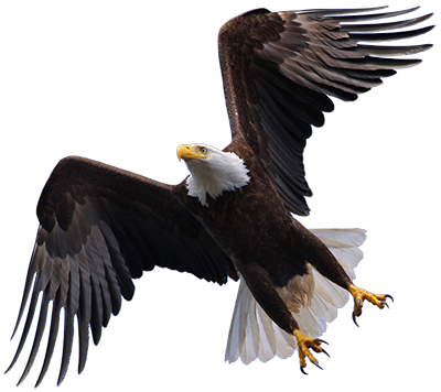 Flying Eagle PNG HD - Eagle HD PNG