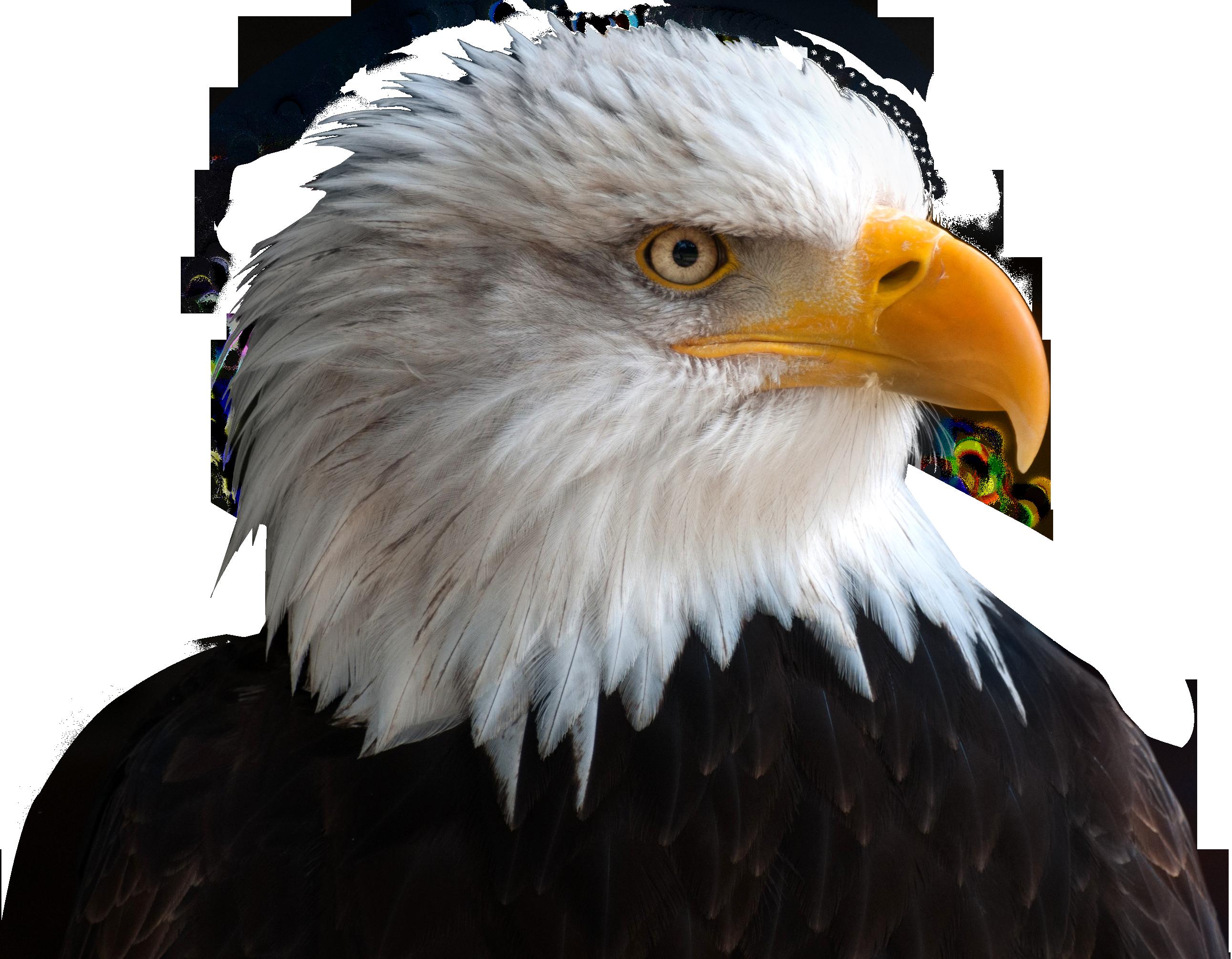 Eagle PNG - 13928