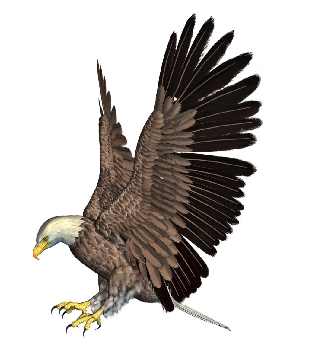 Eagle 02 PNG Stock by Roy3D - Eagle PNG