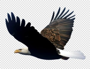 Eagle PNG image #3 - Eagle PNG